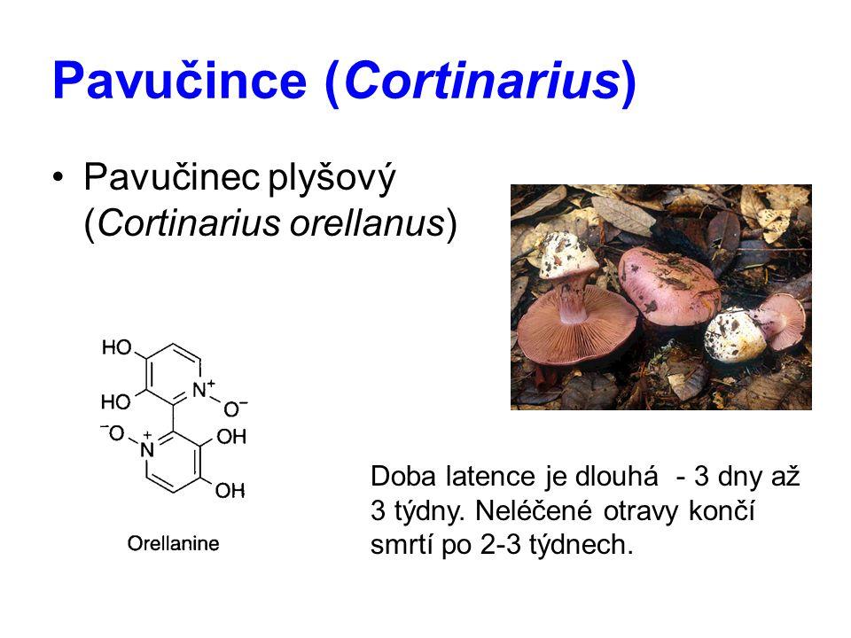 Pavučince (Cortinarius)