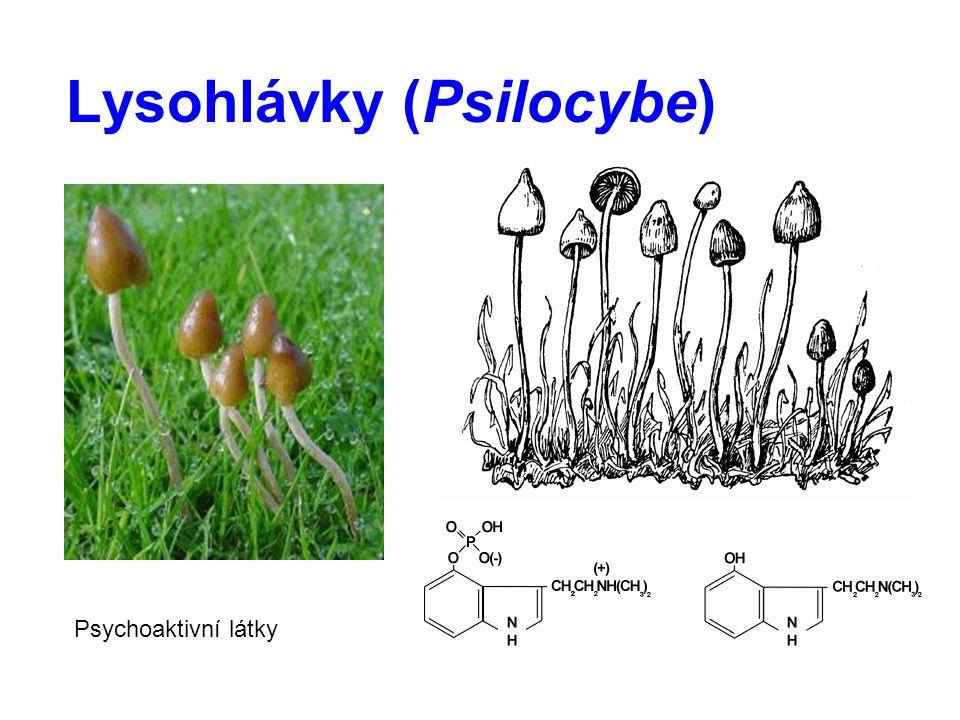 Lysohlávky (Psilocybe)