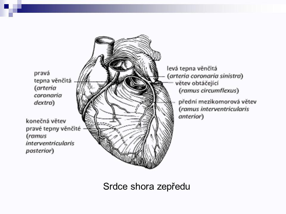 Srdce shora zepředu