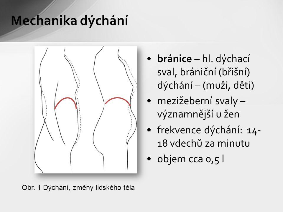 Mechanika dýchání bránice – hl. dýchací sval, brániční (břišní) dýchání – (muži, děti) mezižeberní svaly – významnější u žen.