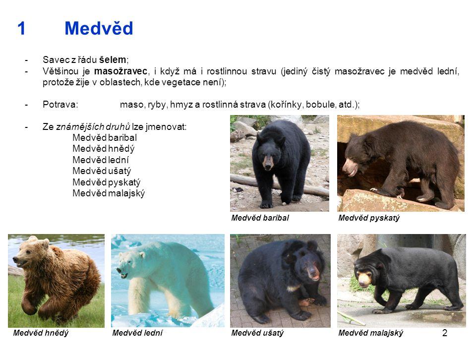 1 Medvěd Savec z řádu šelem;