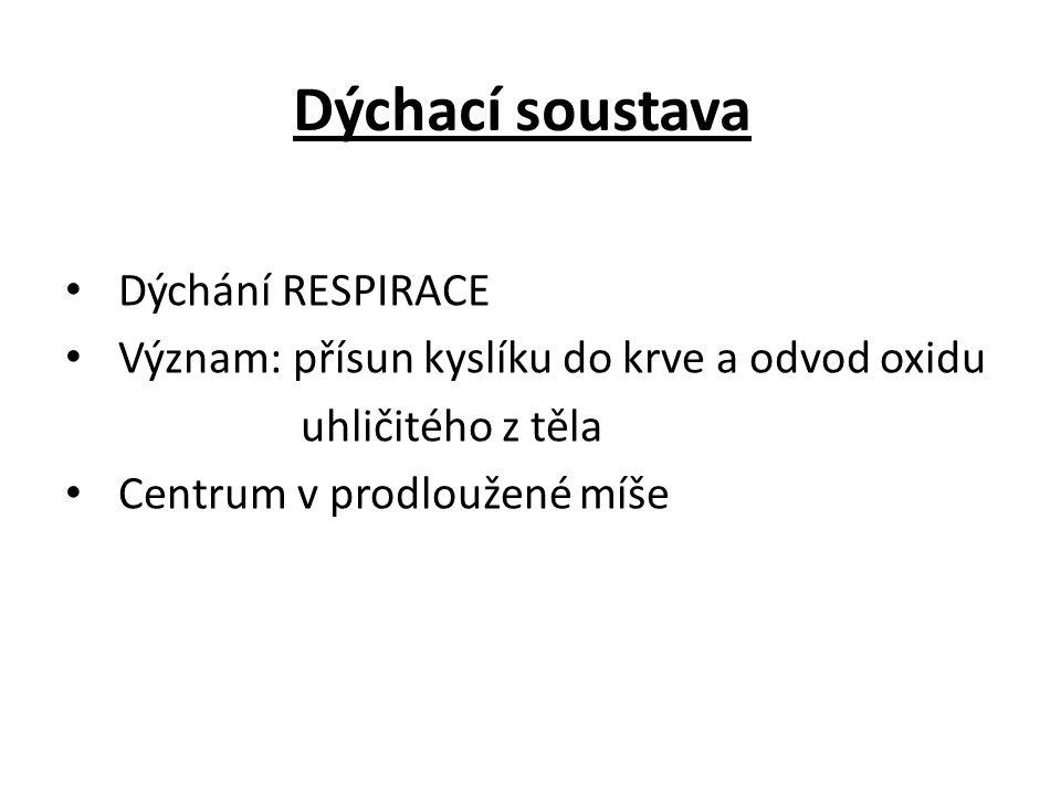 Dýchací soustava Dýchání RESPIRACE