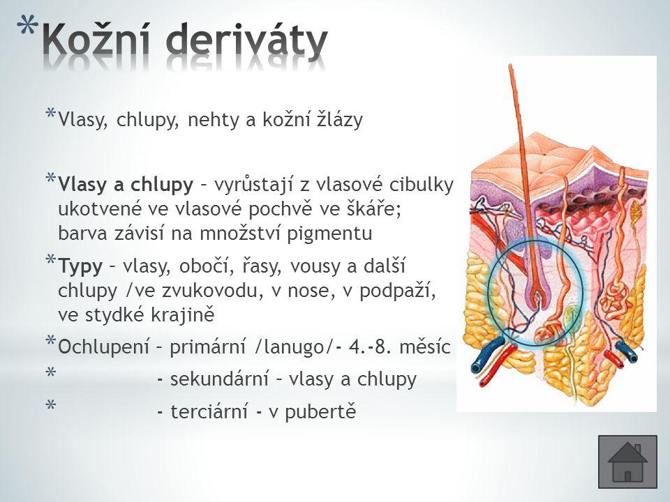 Kožní deriváty Vlasy, chlupy, nehty a kožní žlázy