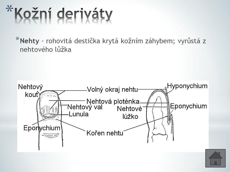 Kožní deriváty Nehty – rohovitá destička krytá kožním záhybem; vyrůstá z nehtového lůžka