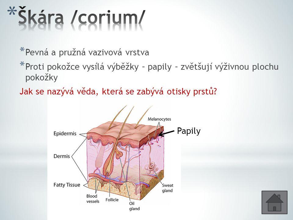 Škára /corium/ Pevná a pružná vazivová vrstva