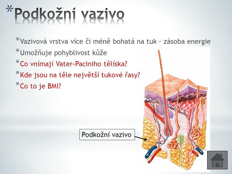 Podkožní vazivo Vazivová vrstva více či méně bohatá na tuk – zásoba energie. Umožňuje pohyblivost kůže.
