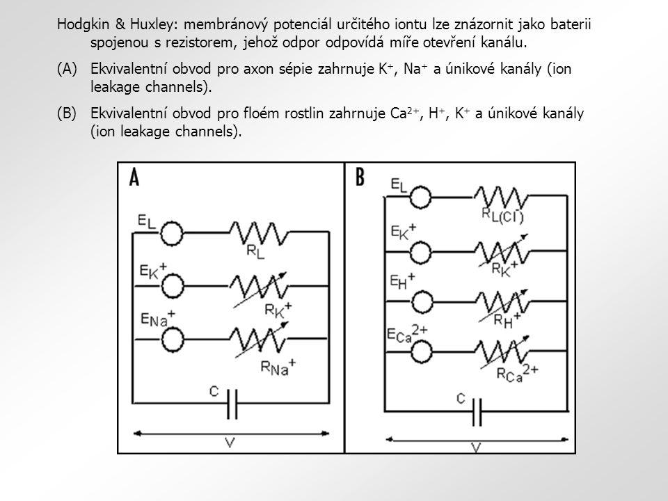 Hodgkin & Huxley: membránový potenciál určitého iontu lze znázornit jako baterii spojenou s rezistorem, jehož odpor odpovídá míře otevření kanálu.