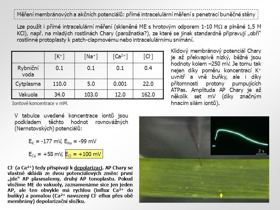 Měření membránových a akčních potenciálů: přímé intracelulární měření s penetrací buněčné stěny