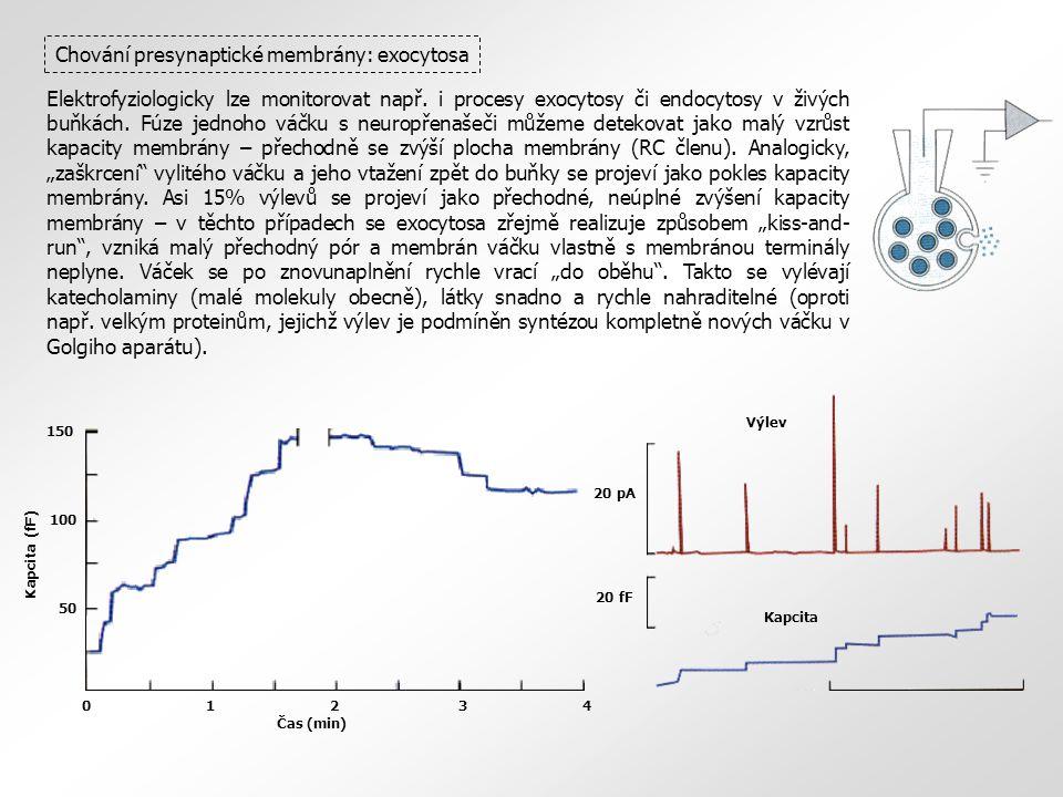 Chování presynaptické membrány: exocytosa