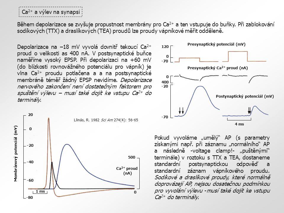 Ca2+ a výlev na synapsi