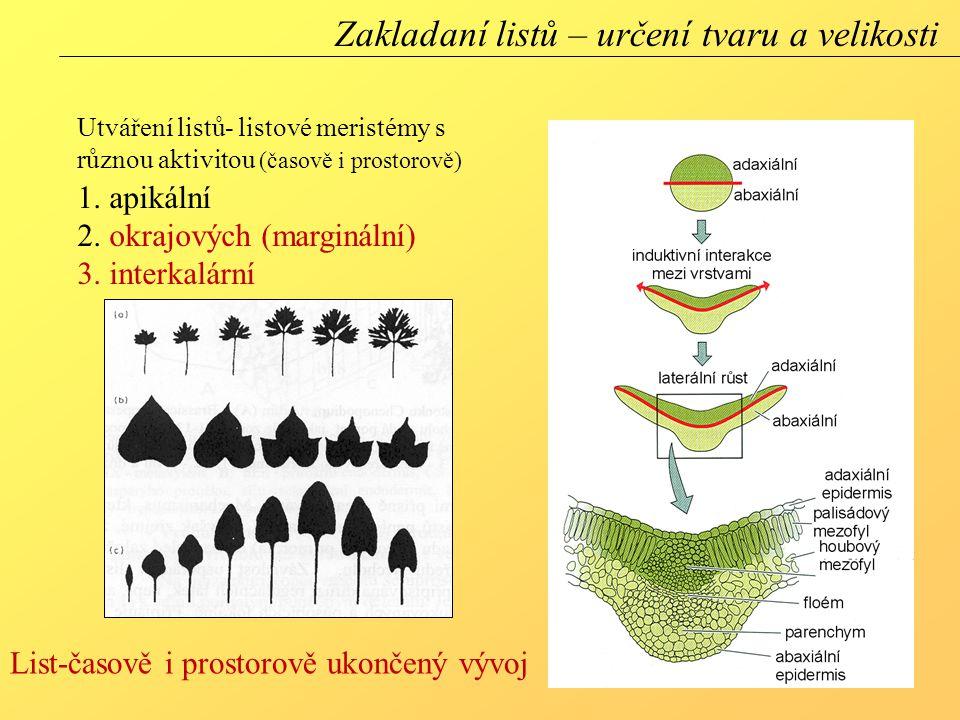 Zakladaní listů – určení tvaru a velikosti
