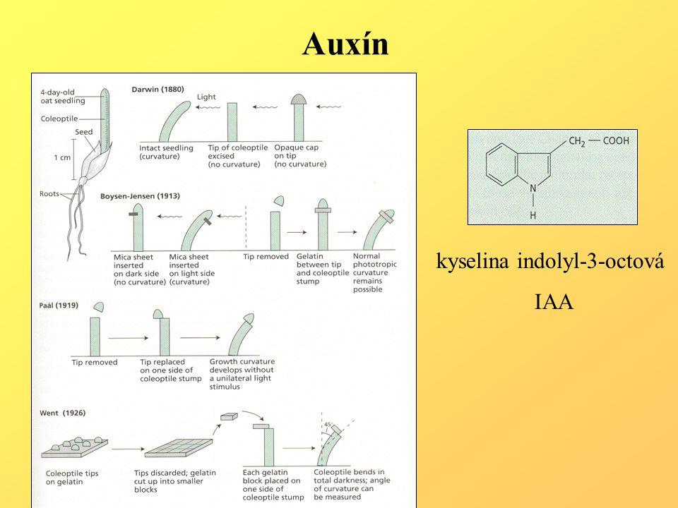 Auxín kyselina indolyl-3-octová IAA