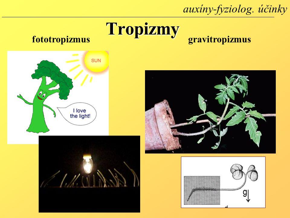 auxíny-fyziolog. účinky