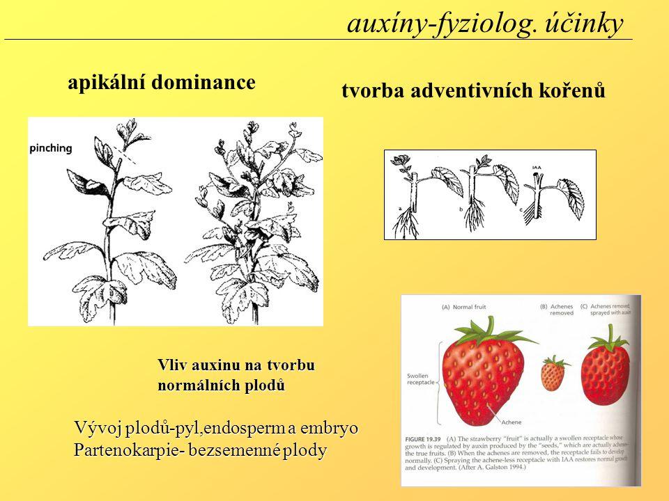tvorba adventivních kořenů