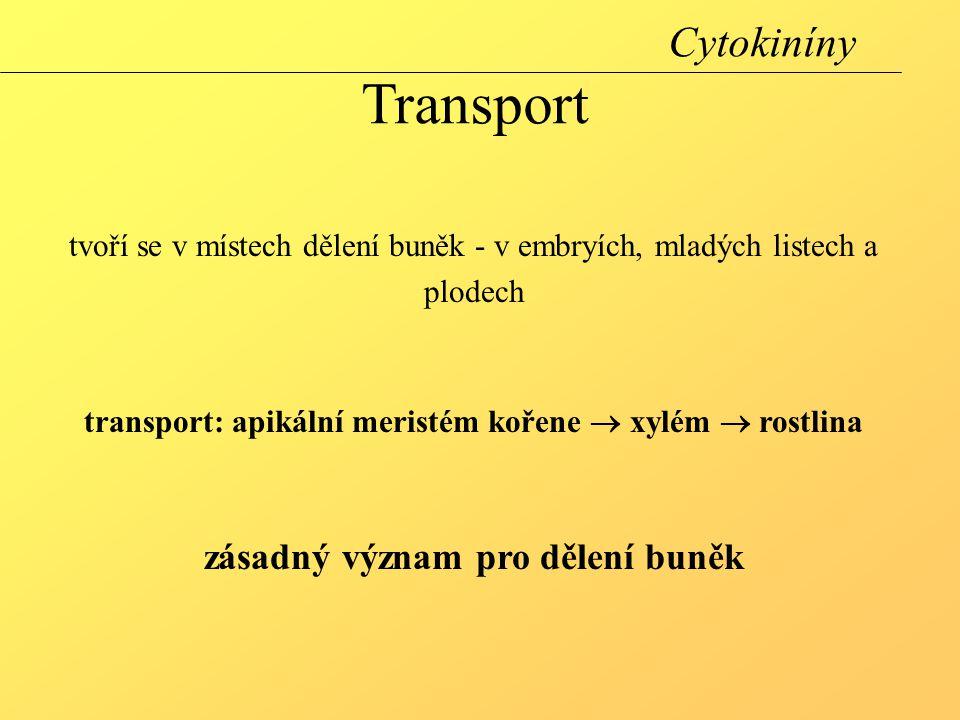 Cytokiníny Transport zásadný význam pro dělení buněk