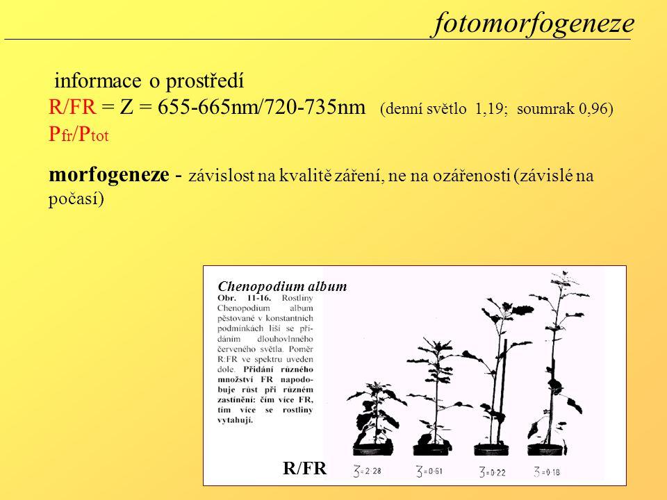 fotomorfogeneze informace o prostředí