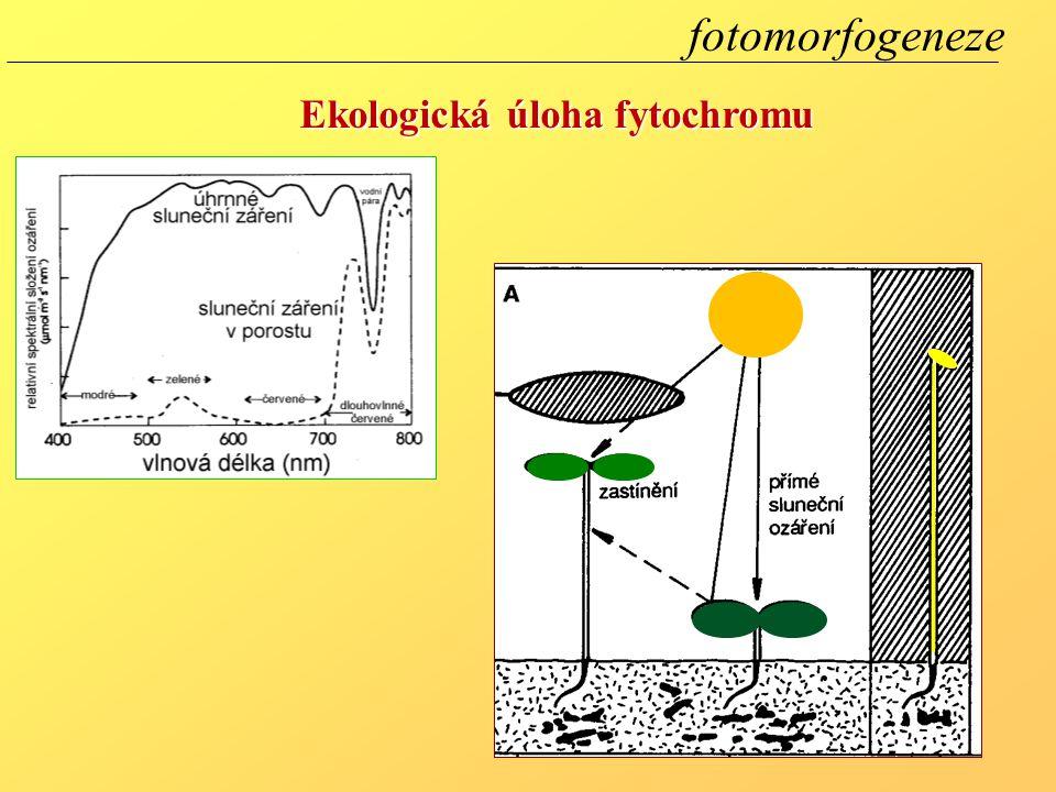 fotomorfogeneze Ekologická úloha fytochromu