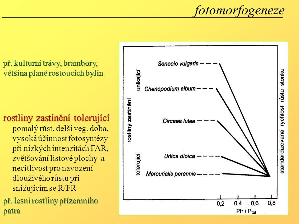 fotomorfogeneze rostliny zastínění tolerující