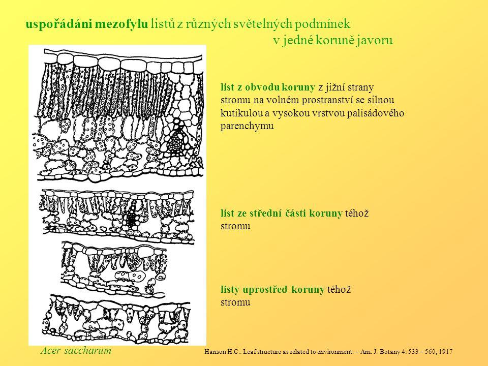 uspořádáni mezofylu listů z různých světelných podmínek