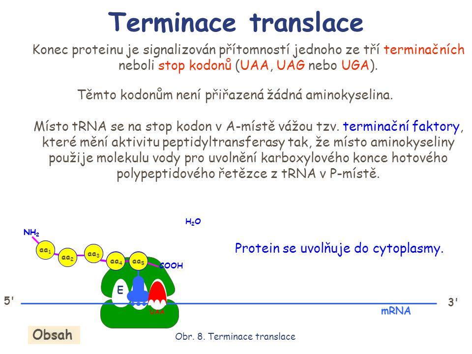 Terminace translace Konec proteinu je signalizován přítomností jednoho ze tří terminačních neboli stop kodonů (UAA, UAG nebo UGA).