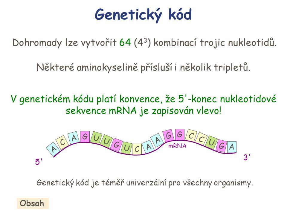 Genetický kód Dohromady lze vytvořit 64 (43) kombinací trojic nukleotidů. Některé aminokyselině přísluší i několik tripletů.