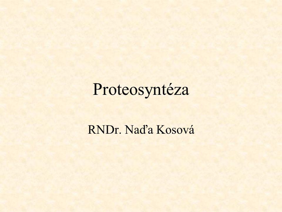 Proteosyntéza RNDr. Naďa Kosová