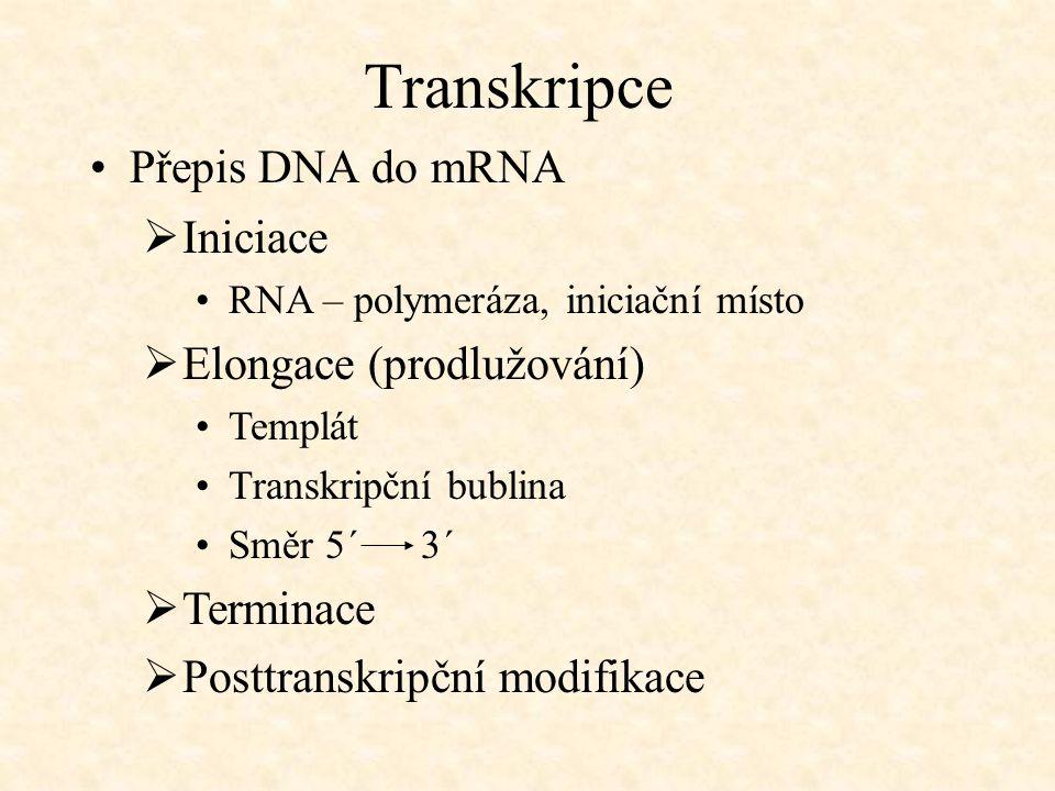 Transkripce Přepis DNA do mRNA Iniciace Elongace (prodlužování)
