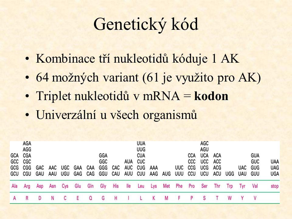 Genetický kód Kombinace tří nukleotidů kóduje 1 AK