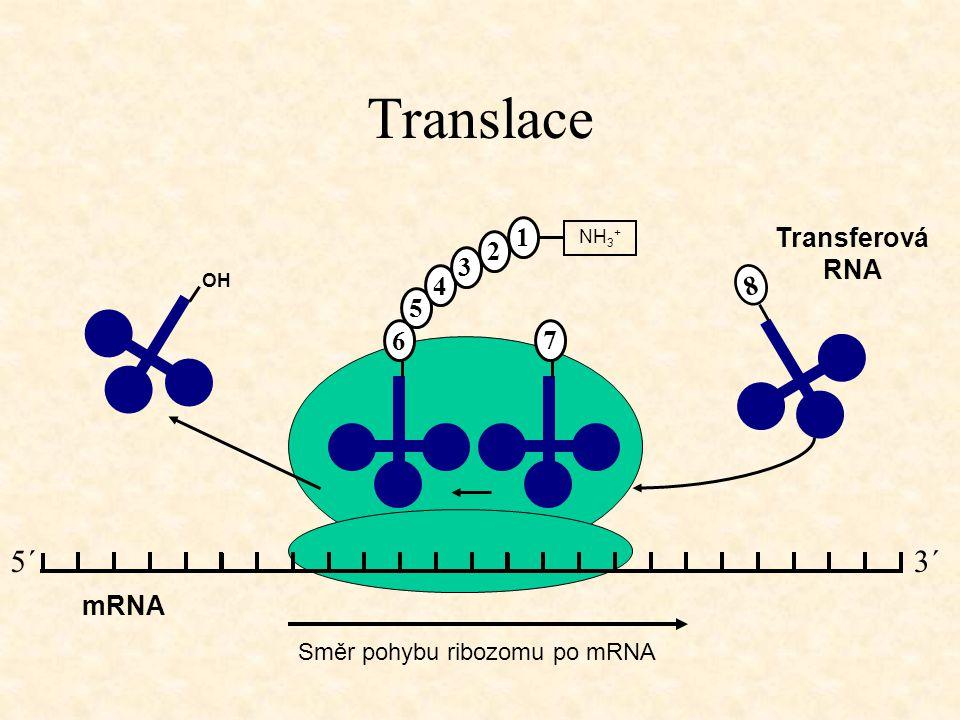 Translace 5´ 3´ 1 Transferová RNA 2 3 4 8 5 6 7 mRNA