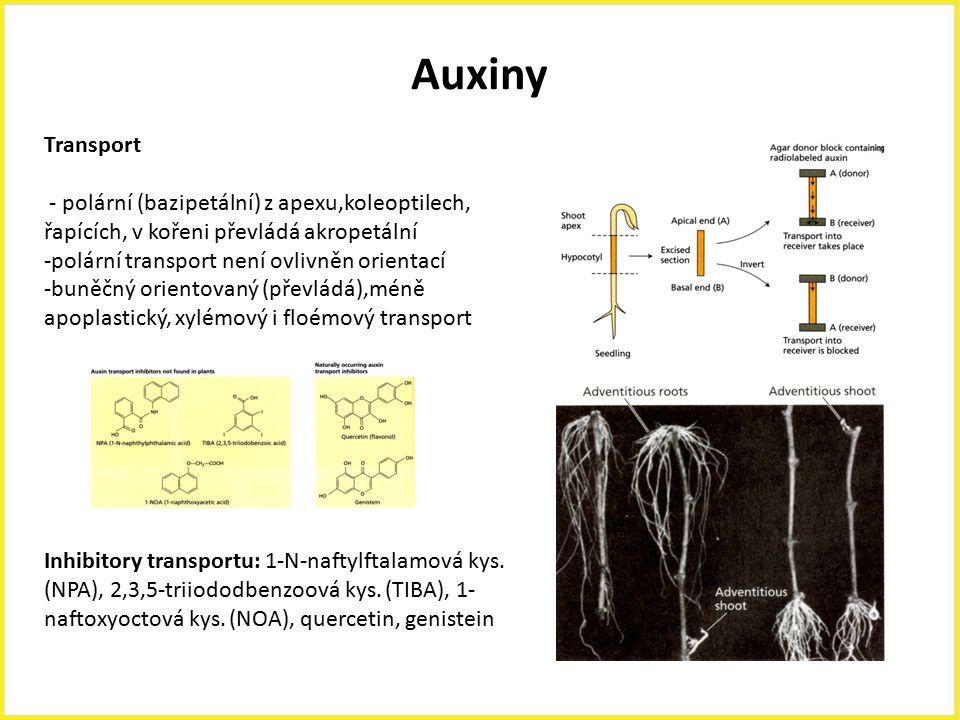 Auxiny Transport. - polární (bazipetální) z apexu,koleoptilech, řapících, v kořeni převládá akropetální.