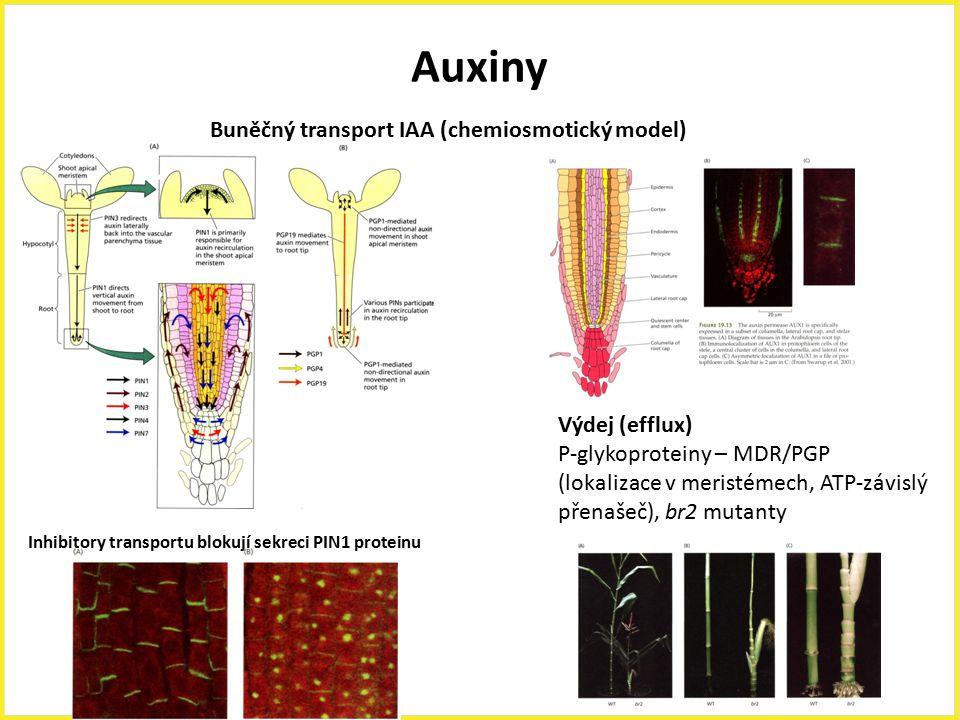 Auxiny Buněčný transport IAA (chemiosmotický model) Výdej (efflux)