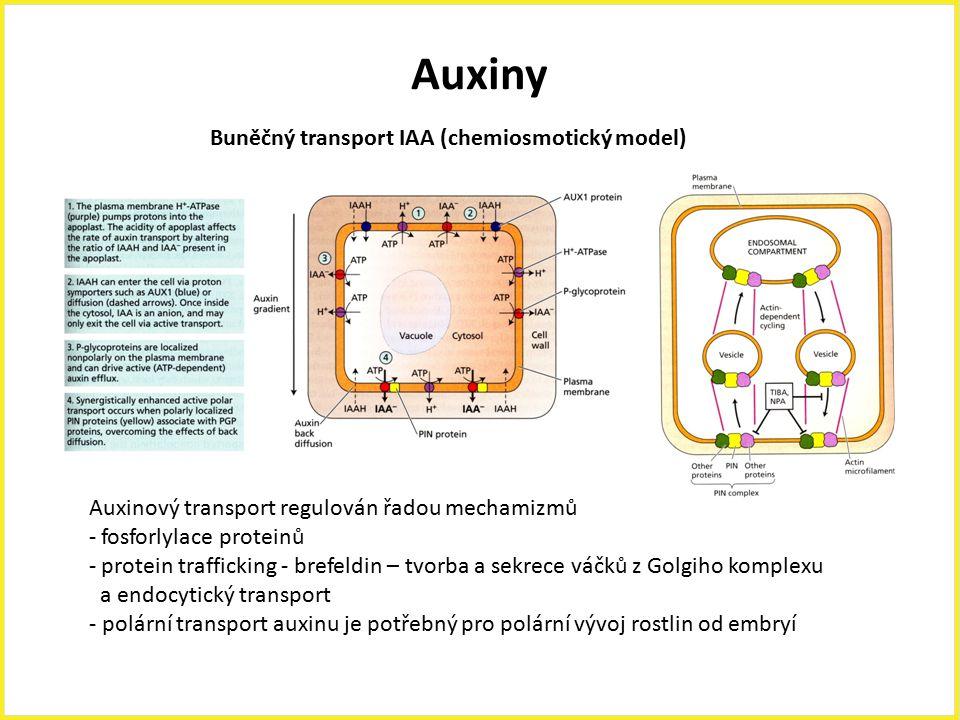 Auxiny Buněčný transport IAA (chemiosmotický model)