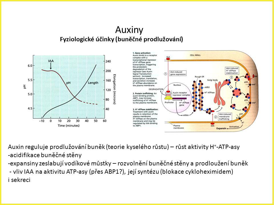 Auxiny Fyziologické účinky (buněčné prodlužování)