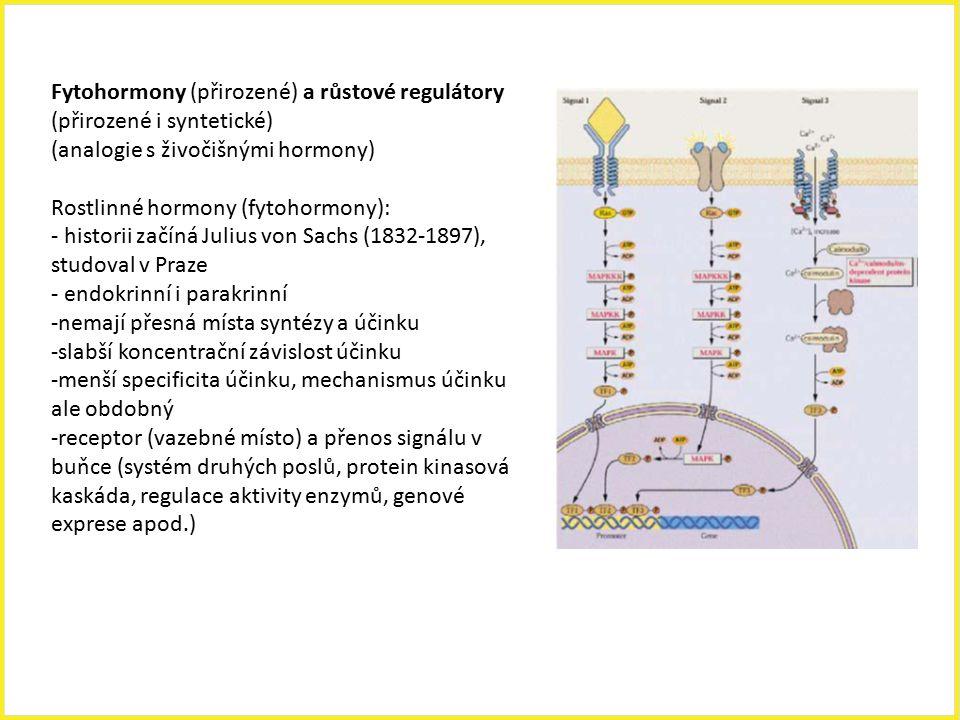 Fytohormony (přirozené) a růstové regulátory (přirozené i syntetické)