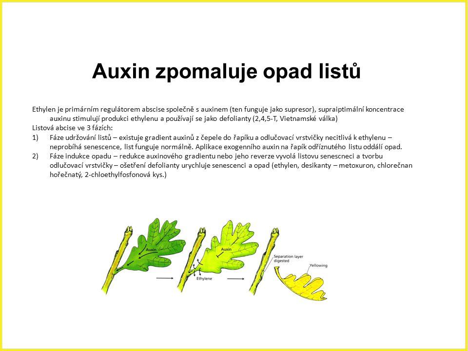 Auxin zpomaluje opad listů