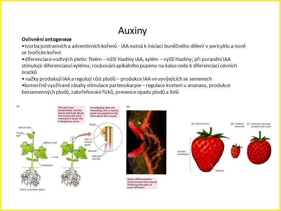 Auxiny Ovlivnění ontogeneze