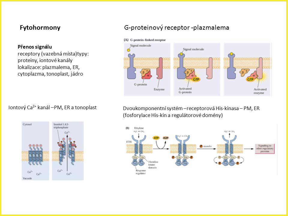 G-proteinový receptor -plazmalema