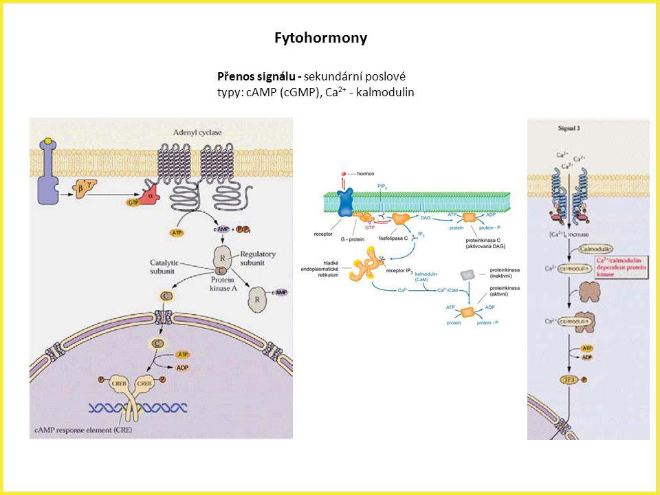 Fytohormony Přenos signálu - sekundární poslové