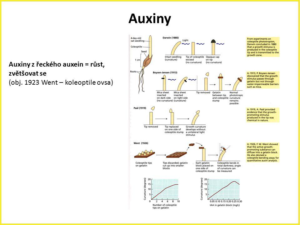 Auxiny Auxiny z řeckého auxein = růst, zvětšovat se