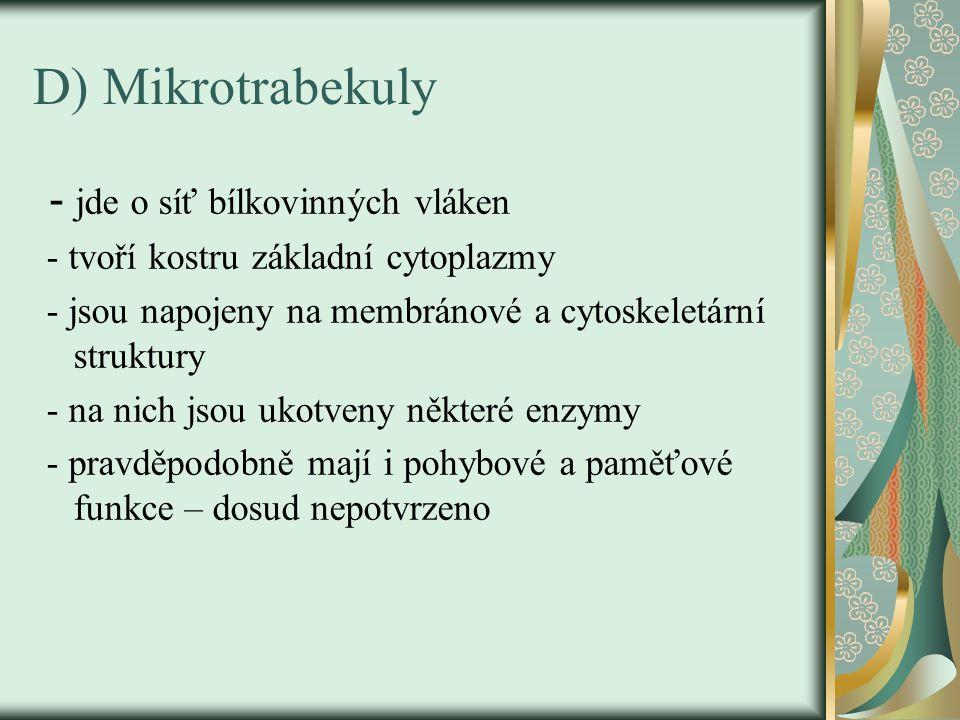 D) Mikrotrabekuly - jde o síť bílkovinných vláken