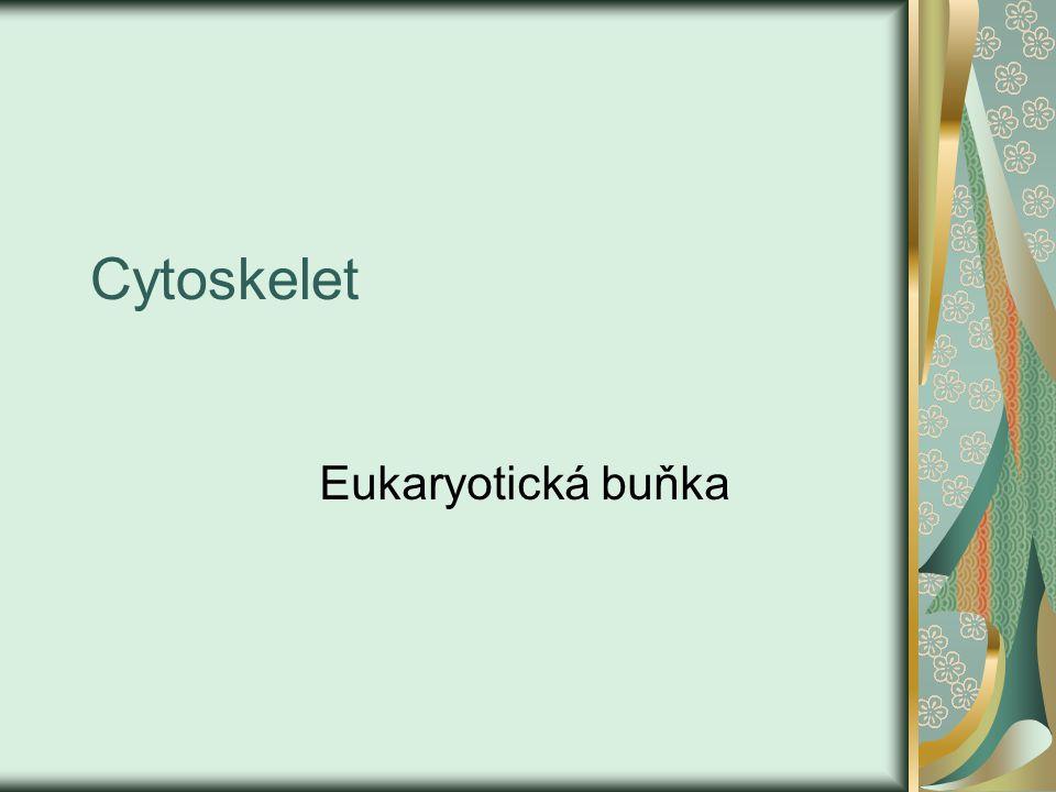 Cytoskelet Eukaryotická buňka