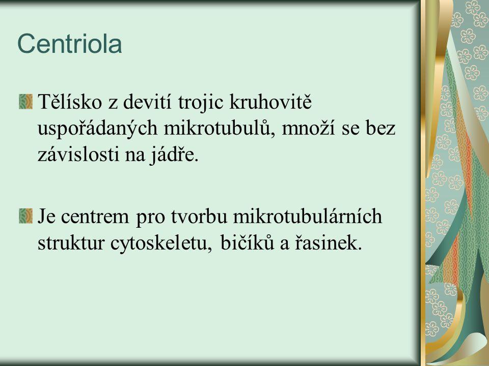 Centriola Tělísko z devití trojic kruhovitě uspořádaných mikrotubulů, množí se bez závislosti na jádře.