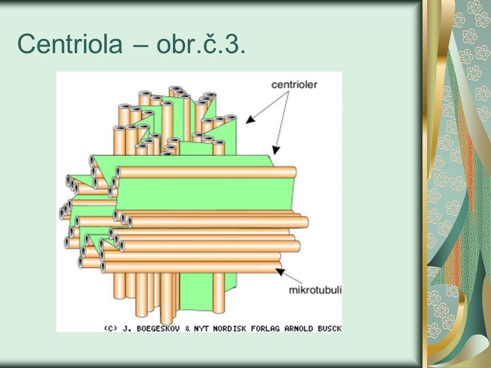 Centriola – obr.č.3.