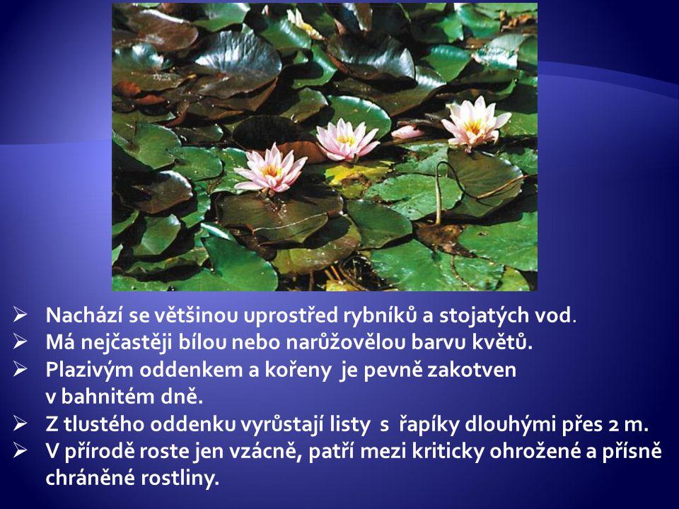 Nachází se většinou uprostřed rybníků a stojatých vod.