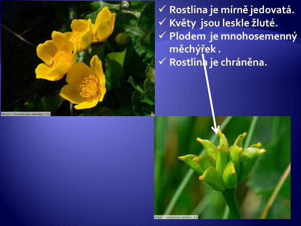 Rostlina je mírně jedovatá.