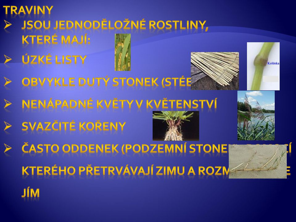 Traviny jsou Jednoděložné rostliny, které Mají: Úzké listy. Obvykle Dutý stonek (stéblo) Nenápadné květy v květenství.