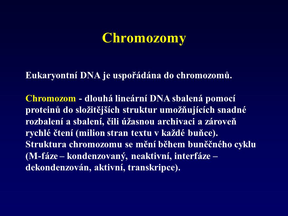 Chromozomy Eukaryontní DNA je uspořádána do chromozomů.