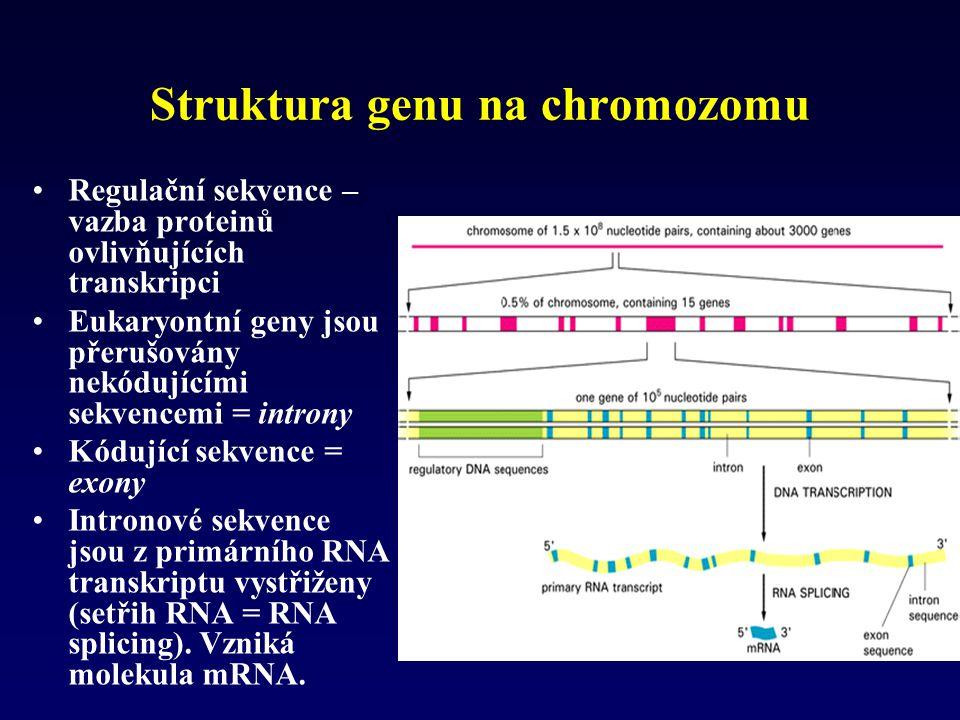 Struktura genu na chromozomu