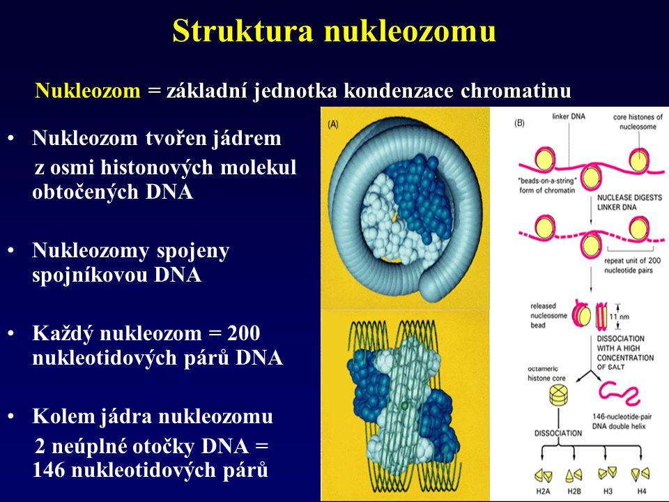 Struktura nukleozomu Nukleozom = základní jednotka kondenzace chromatinu. Nukleozom tvořen jádrem.