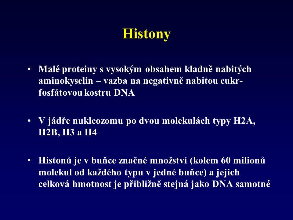 Histony Malé proteiny s vysokým obsahem kladně nabitých aminokyselin – vazba na negativně nabitou cukr-fosfátovou kostru DNA.